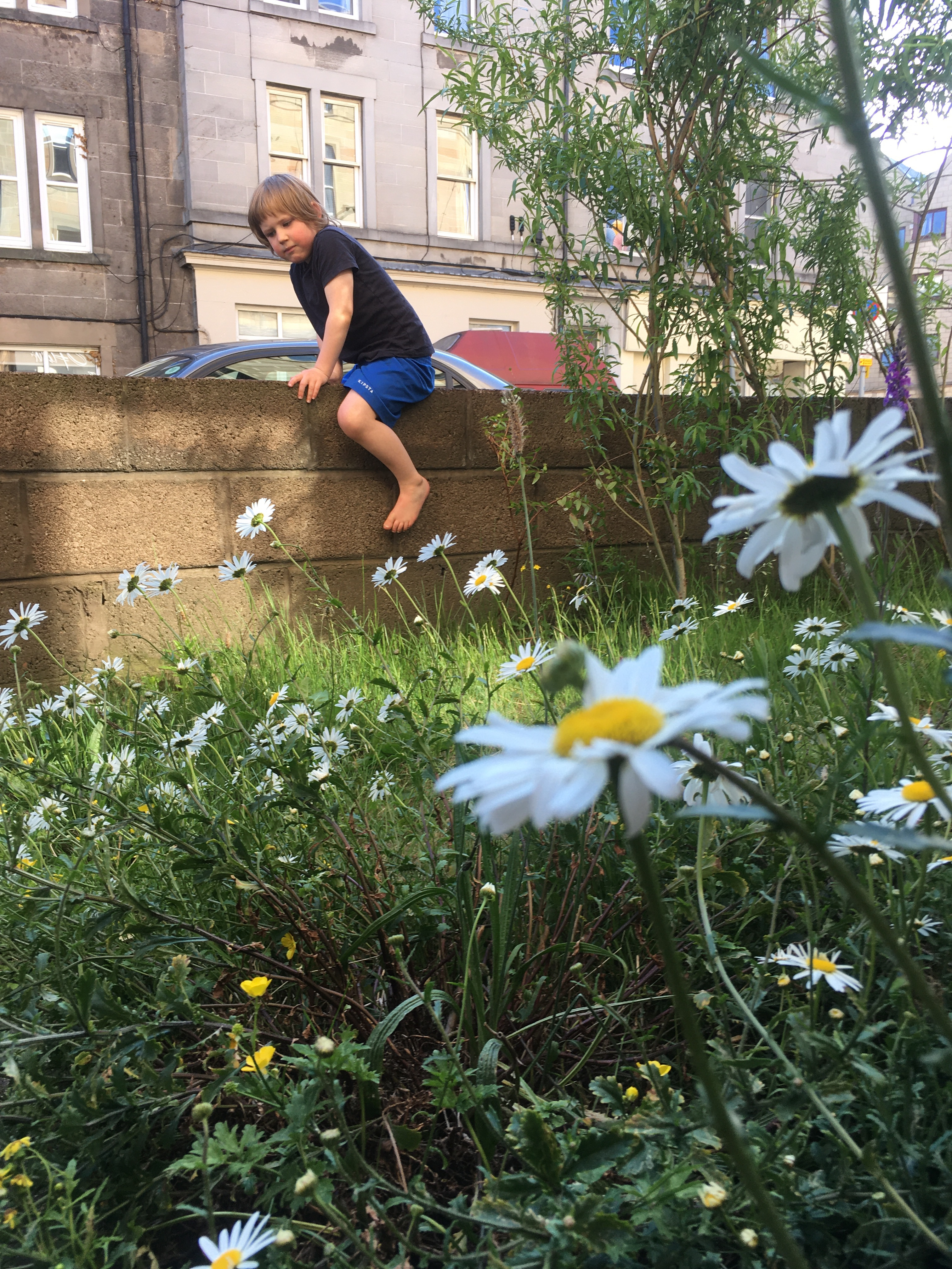 Boy sits on the fence, city background, daisies in the foreground